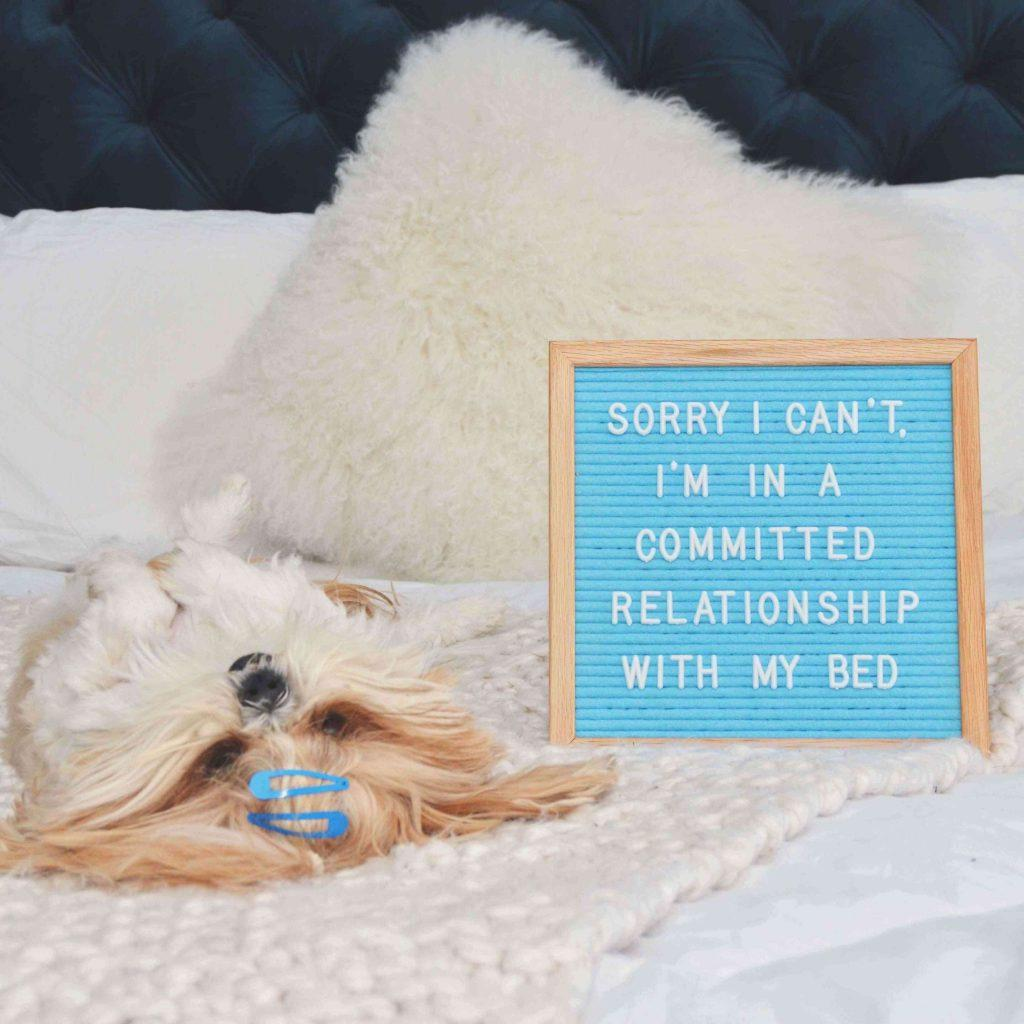 blue-letter-board-with-dog-relationship-announcement-teachworkoutlove.com