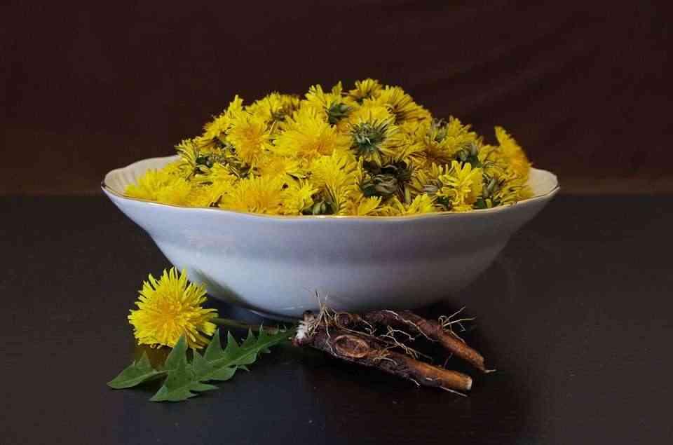 best-detox-foods-dandelion-roots