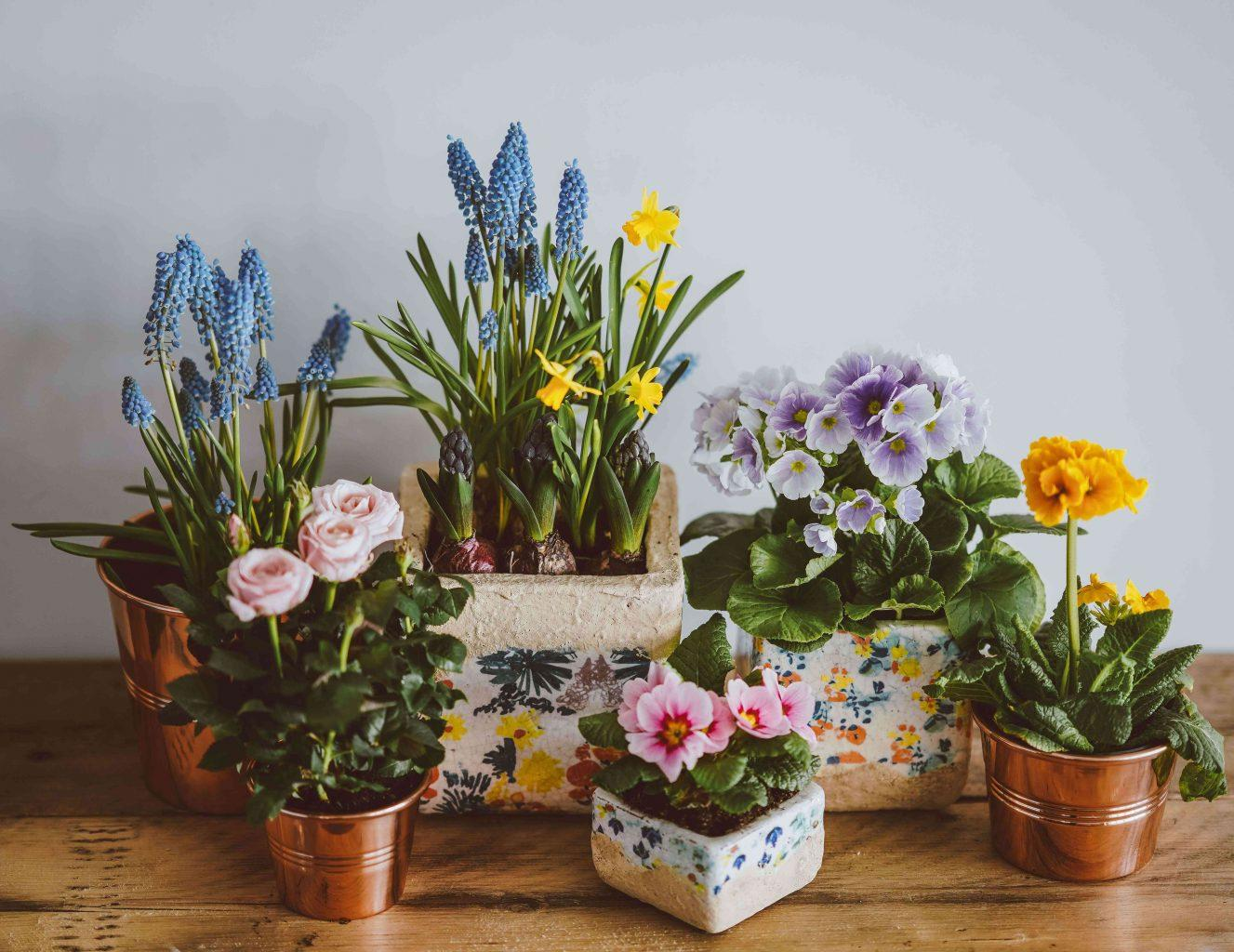 Photo of The Perfect Houseplants For You Based on Zodiac Sign