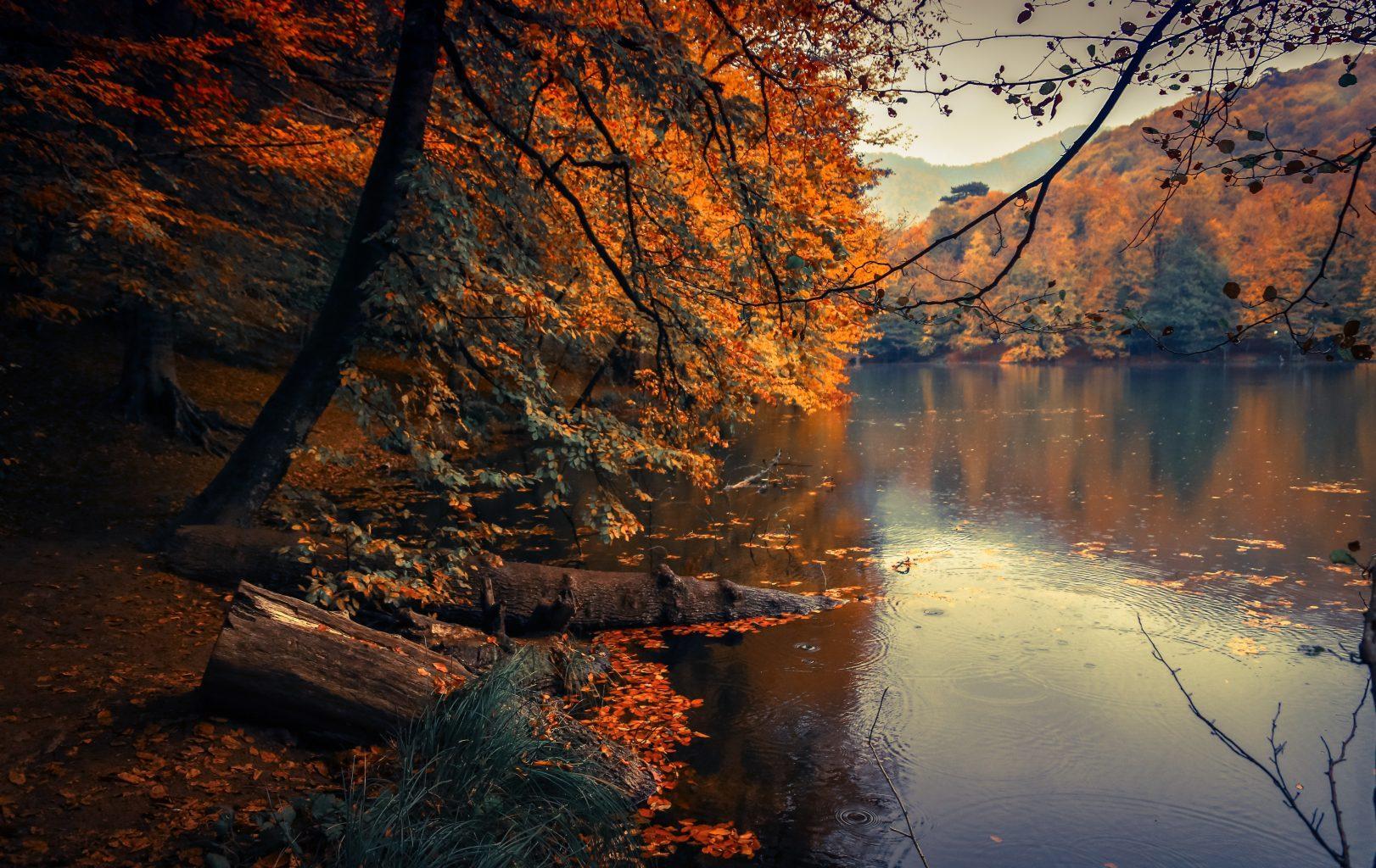 beautiful-fall-foilage