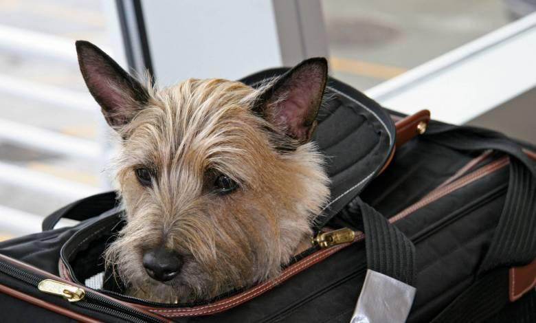 How To Effectively Travel With Pets
