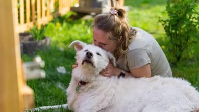 6 Things Every First Time Mom Should Know About Dogs